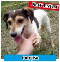 calypsa