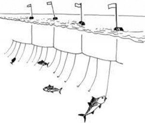pesca-spada