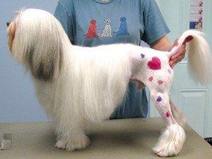 cane-tautato