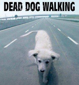 deaddogwalking