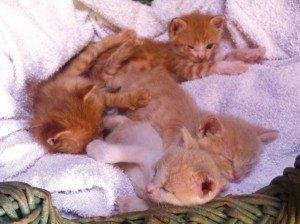 canile-acqui-gattini