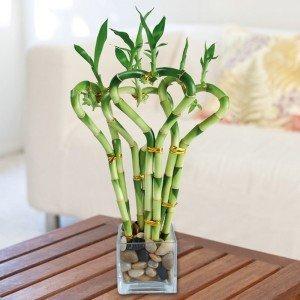 bamboo-vaso
