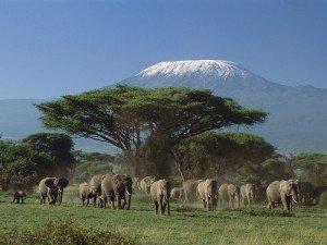 Amboseli-25