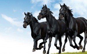 equitazione-05
