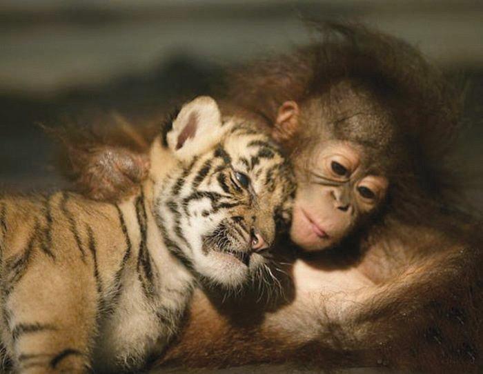 tigre-e-scimmia