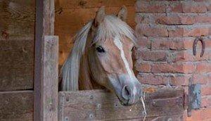 equitazione naturale 02