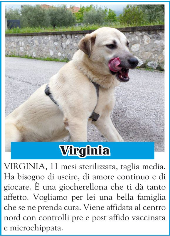 animalando-virginia