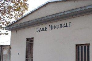Canile-Municipale