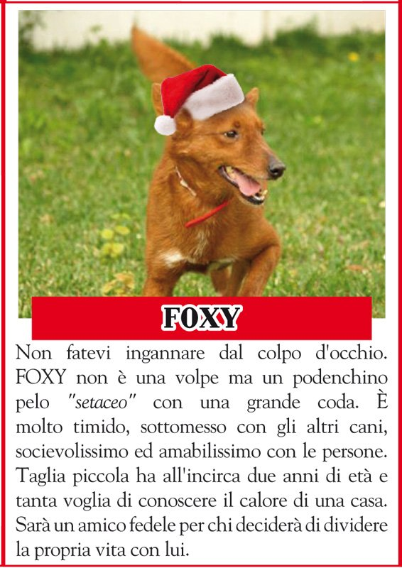 ANIMALANDO-FOXY