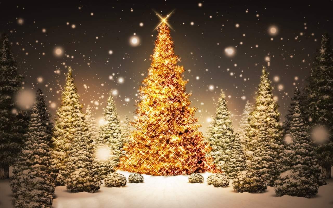 Gli Alberi Di Natale E I Mercatini Di Alessandria Wwwdialessandriait