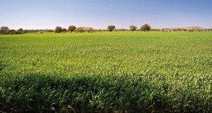 imu-agricola-2