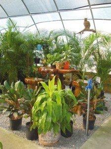 piante-in-casa-1