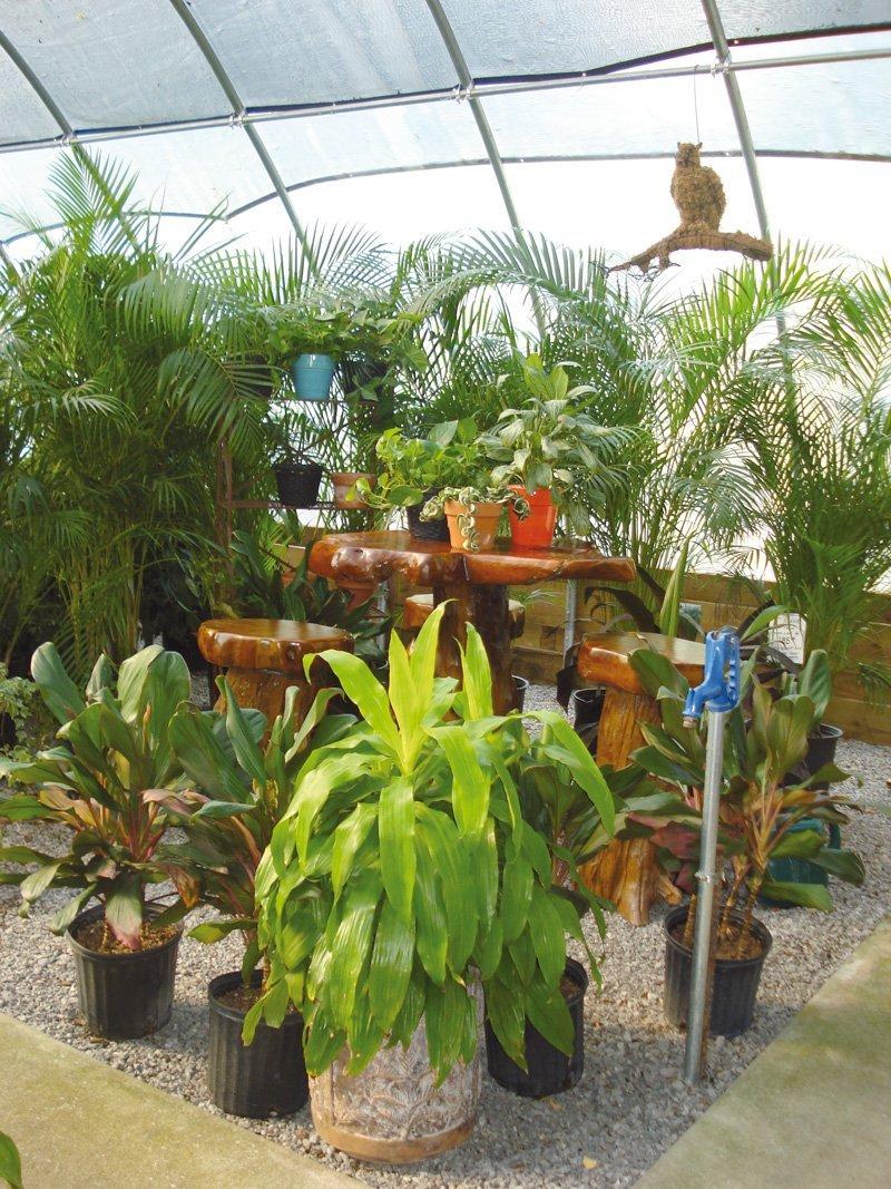 Conservare le piante in inverno for Concime per gerani fatto in casa