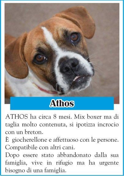 stallo-athos