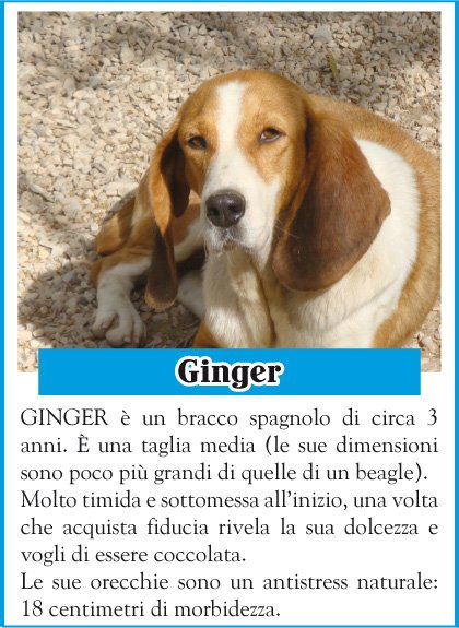 stallo-ginger
