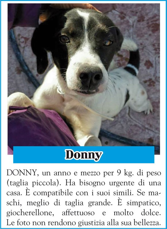 animalando-donny