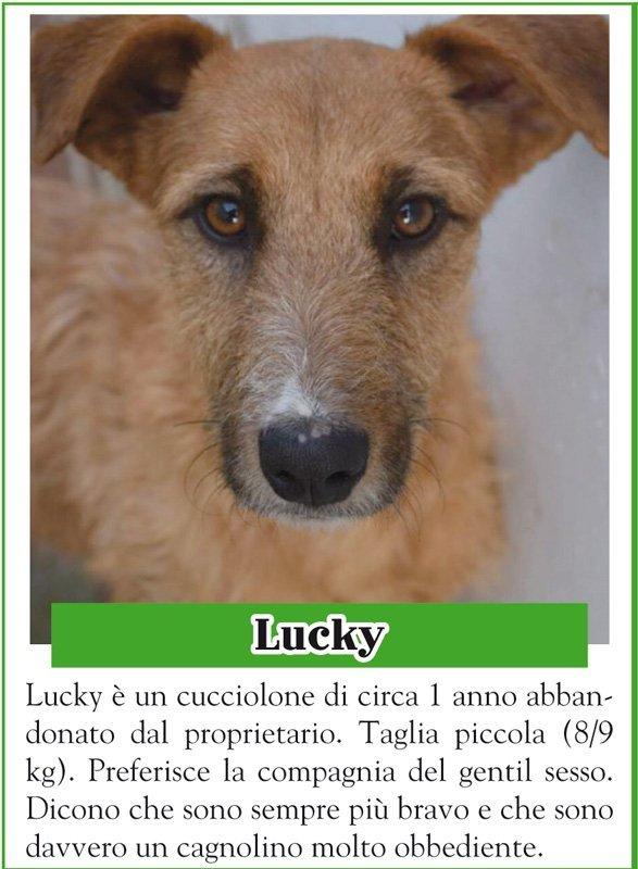 ANIMALANDO-LUCKY