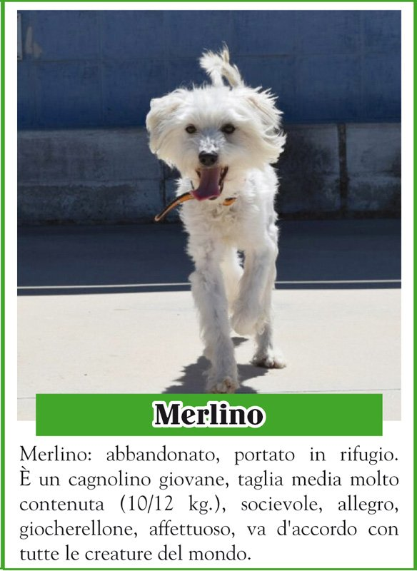 ANIMALANDO-MERLINO