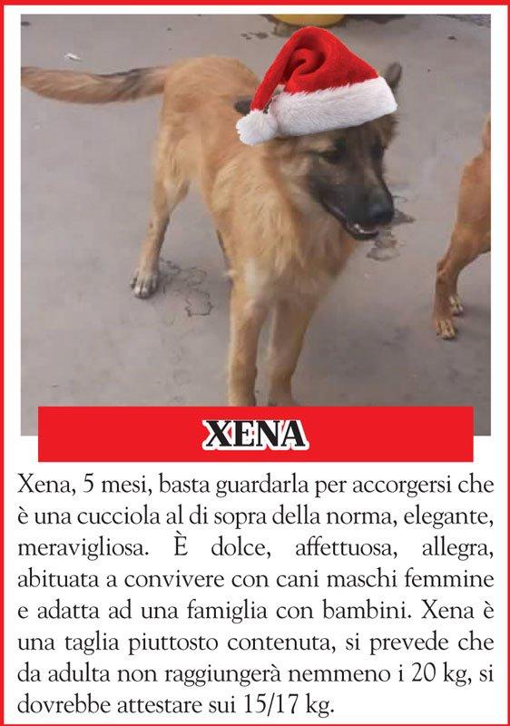 cani-xena