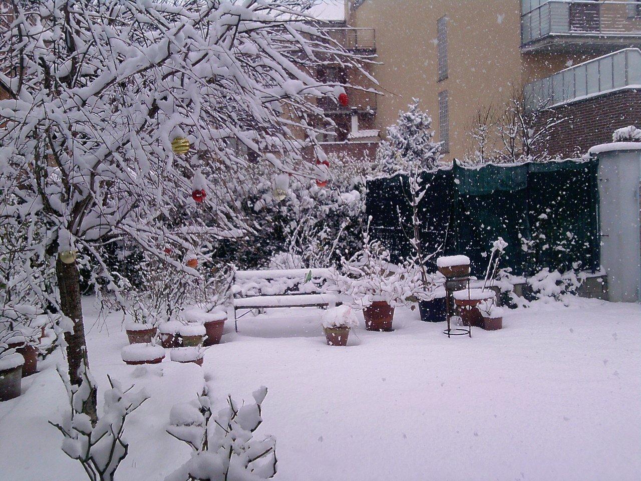 Giardini Di Natale Www Dialessandria It